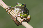 Amphibians and reptiles