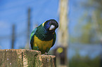 Port Lincoln parrot Bird Park Marlow