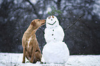 winter dogs II