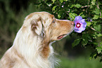 Dogs in Flowers