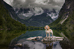 Beagle in the mountains