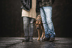 humans and Rhodesian Ridgeback