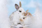 cute animal kids in winter